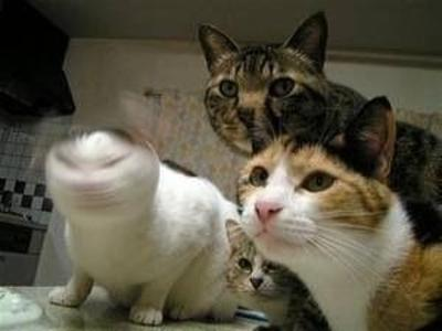 猫の画像 p1_10
