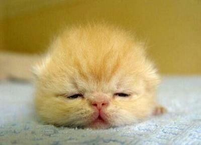 ストレスが「眠い」の原因! 日中の眠気を防ぐス …