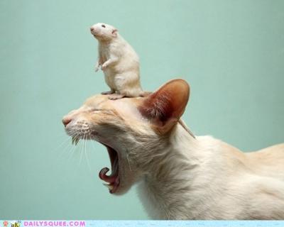 ネズミアレルギー