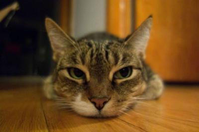 おいしそうな脚の女子校生 246脚目猫ガイジ隔離スレ [無断転載禁止]©bbspink.com->画像>3084枚