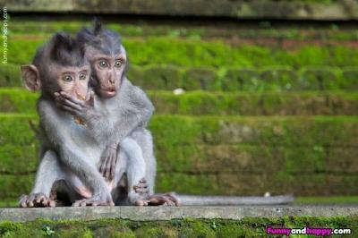 見猿の目を初めて見た - 動物へ...