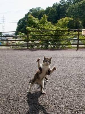 仲間をかばう変なポーズの猫
