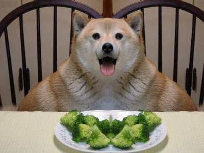 Is Broccoli Good For Dogs