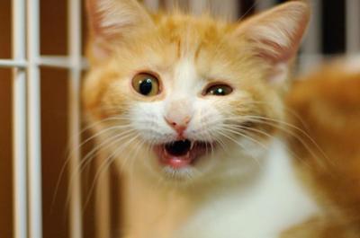 猫の画像 p1_33
