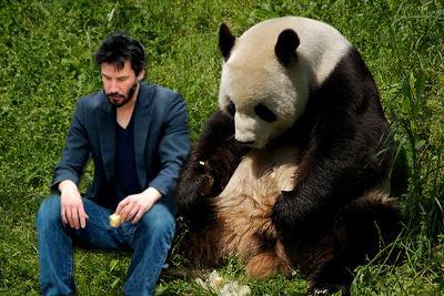 動物園の人気者!かわいいパンダの高画質な画像まとめ!