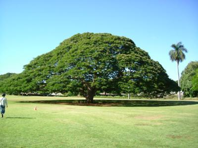 「この~木なんの木…」はどこ? -日立のコマー …