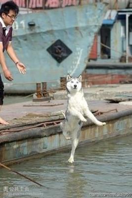 水上を歩く犬
