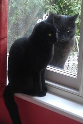 黒 猫 まとめ